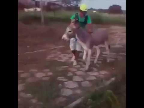caida del hombre montado en burro