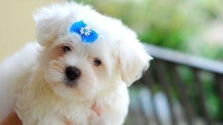 Умная собака / Smart dog