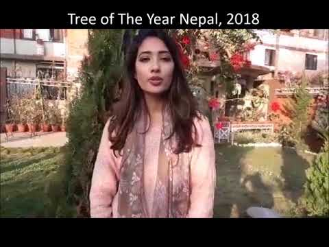 Message from Dibyata Vaidya about Tree of The Year Nepal 2018