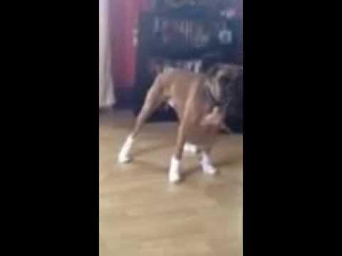 Boxer gets socked