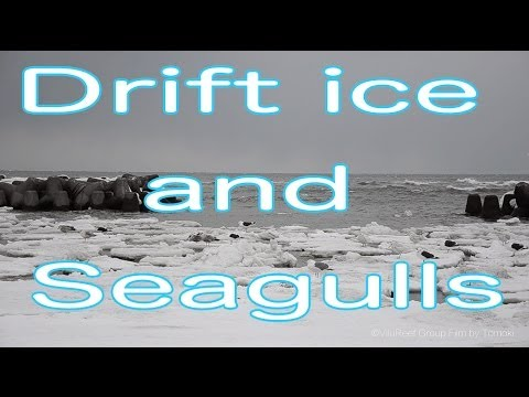【Slow TV】Drift ice and seagull/流氷とかもめ