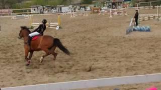 конный спорт, конкур до 80 см.