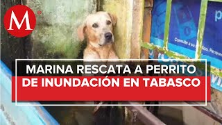 ¡Al borde del llanto! Rescatan a perrito de ahogarse en inundación; video se vuelve viral