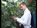 100 тысяч рублей на реализацию авторского проекта получил молодой агроном из Ивановки mp3