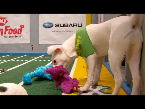 Darby Scores First in Puppy Bowl XII