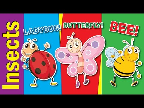 bugs 1 flashcards Learn common insects and bugs vocabulary including ant, butterfly, bee, beetle, dragonfly, grasshopper, spider, wasp and more :.