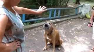 Собака считает