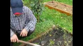 Чернозём на даче - покупать или выращивать (1)?