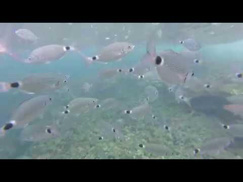 Marine Life around Ibiza