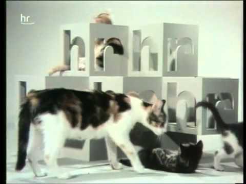 hr Pausenkatzen