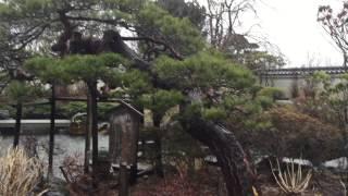 伊達村景 - JapaneseClass.jp