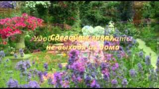 Интернет-магазин садовых цветов Удачка.рф(, 2011-03-28T01:12:52.000Z)