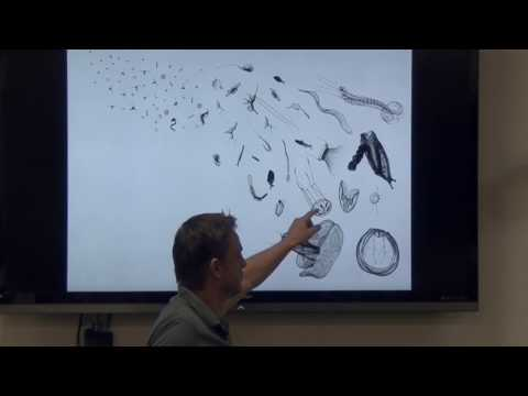 Citizen Science Lecture | Plankton is cool |Cedric Guigand | Key Biscayne