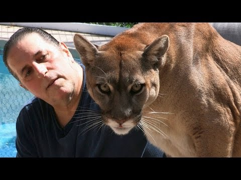 Cougar Man: Living With A Mountain Lion