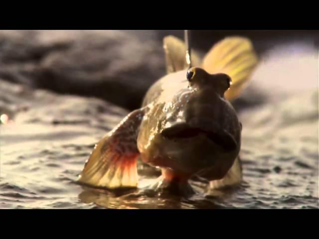 BBC恒河:第三集.[中英双字].rmvb
