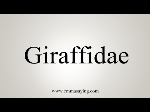 How To Pronounce Giraffidae