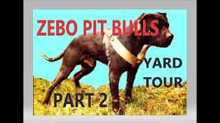 ZEBO PIT BULLS  Yard Tour (part 2) 1999  2000