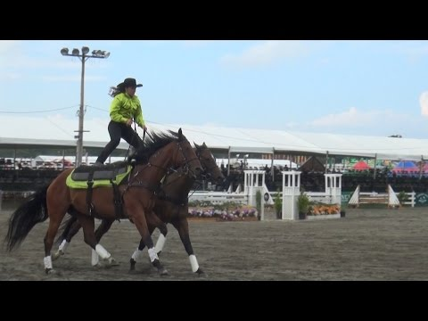 2016 New Jersey State Fair  Sussex County Farm and Horse Show 5