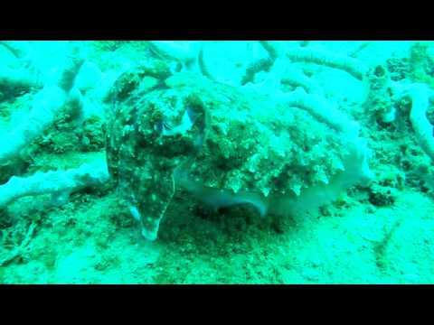 Cuttlefish, Leaf Scorpionfish, Puffer Fish - Tasitolu, Dili, Timor-Leste