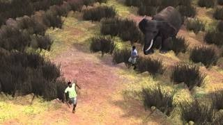 Слон убил браконьера в Зимбабве