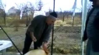 taierea capului la porc