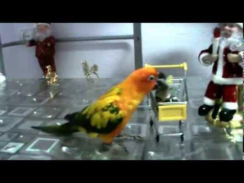 Ник попугай солнечный аратинга!
