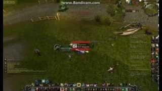 Rottweiler Duelling Assassination Rogue