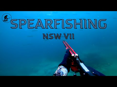 Spearfishing NSW 7 2019