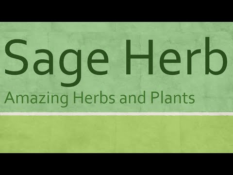 Benefits Of Sage Herb - Amazing Herbs And Plant - Health Benefits Of Sage Herb
