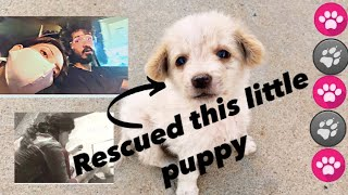 Rescued little puppy 🐶