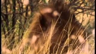 Кошмары дикой природы - 1. Несущие смерть
