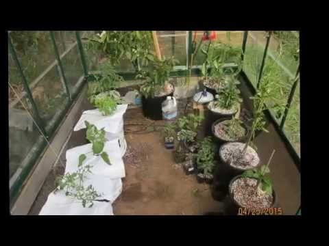 DWC Water Temperature & Reservoir Treatments & Hydroponic Greenhouse