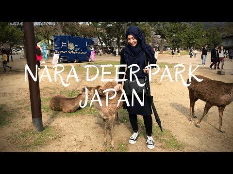 HALAL Japanese Street Food Tour in NARA JAPAN   Day 8: Nara Deer Park, Todaiji Temple & Mochi!