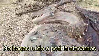 supuesto dragón real capturado en playas de china