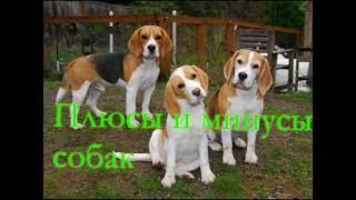 Плюсы и минусы собак