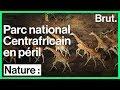 Des rangers tentent de protéger la biodiversité de ce parc national