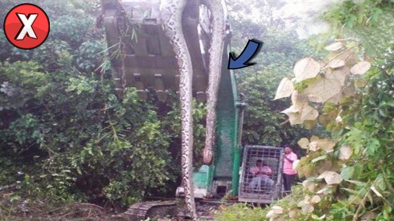 Estas 07 coisas encontradas na selva, irão te surpreender