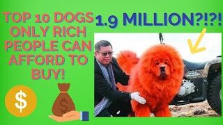Top 10 Dog Breeds That Only Rich People Can Afford to Buy