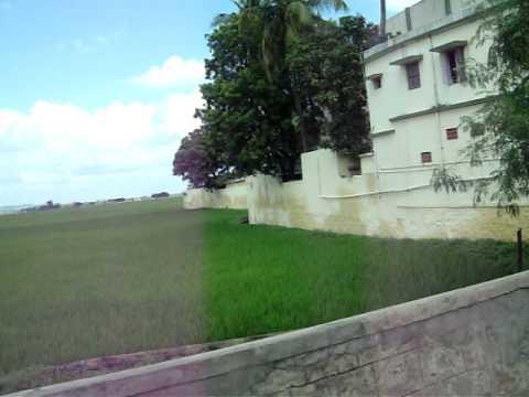 palayamkottai   Agriculture area  for paddy field  tirunelveli   jelari