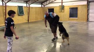 "Best Family Protection Dog ""vlad"" Obedience Protection Trained Dog For Sale K9"
