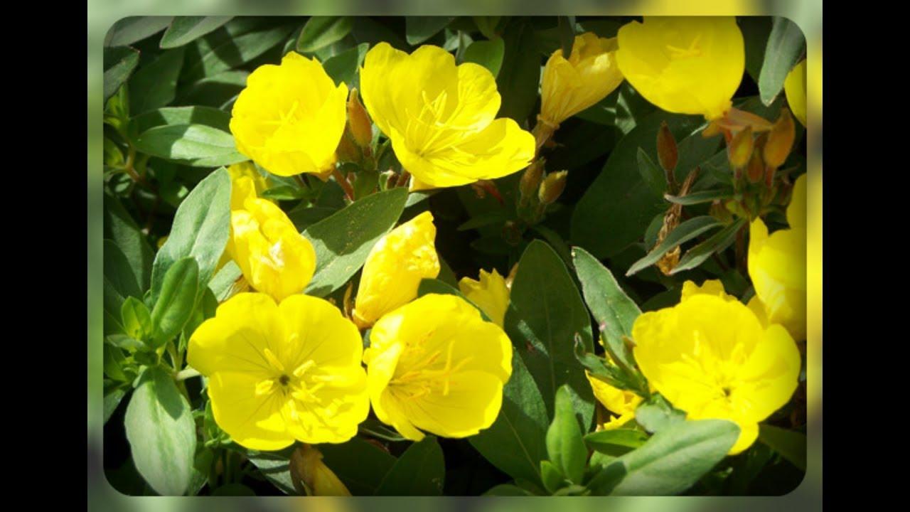 Цветы в горшках что дарить