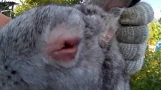 Болезни кроликов: симптомы и их лечение, видео и фото