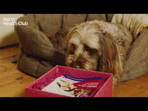 The Best Present For Your Pet - The Pet Health Club