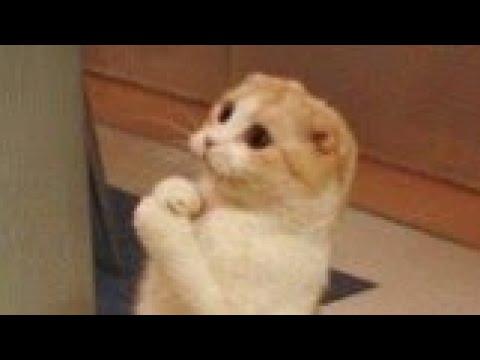 Download Śmieszne koty