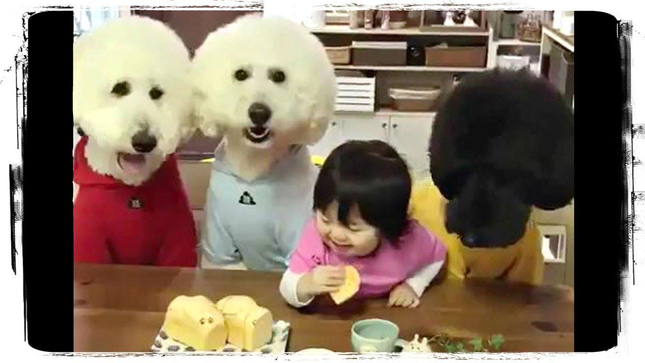 СМЕШНЫЕ МАЛЫШИ, Дети и Животные | Funny Animals and Kids 640 | Заработок с Вложениями на Автомате