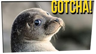 weekend scramble sea lion drags girl into water ft davidsocomedy
