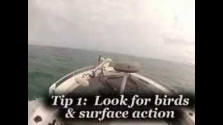 Tip Top Fishing (Seisia Pelagics) - As seen in About Fishing NQ Volume 4