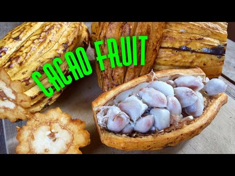 HOW TO OPEN AND EAT CACAO FRUIT