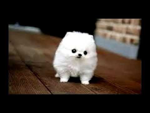 Pictures of small dogs
