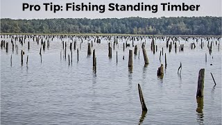 Pro Tip: Standing Timber